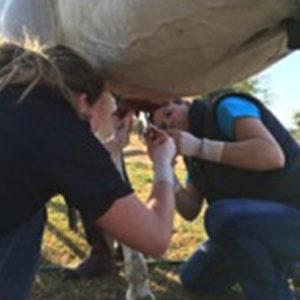 wound-management-surgery-news-fourways-equine-vet