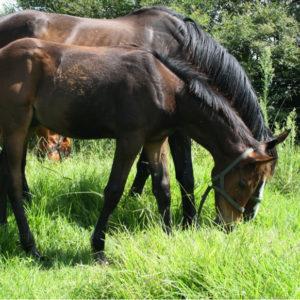 fourways-equine-facilities-horses-semen-clinic-specialist-vet