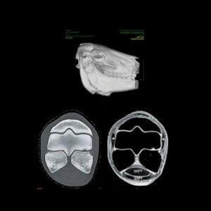 equicares-new-ct-scanner-fourways-equine-specialist-vet