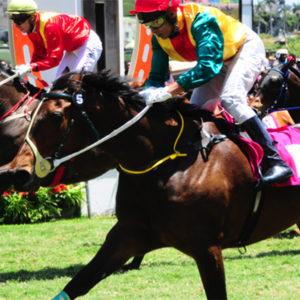 perfect-horse-fourways-equine-vet-horse-care-specialist-clinic